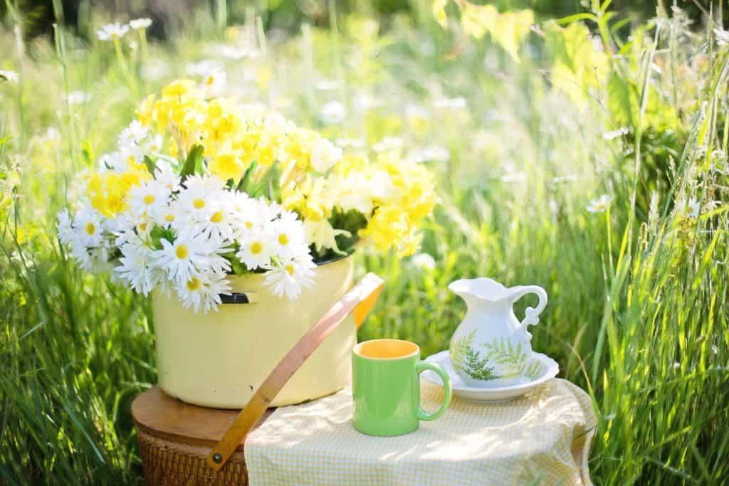 daisies picnic - the prisoner