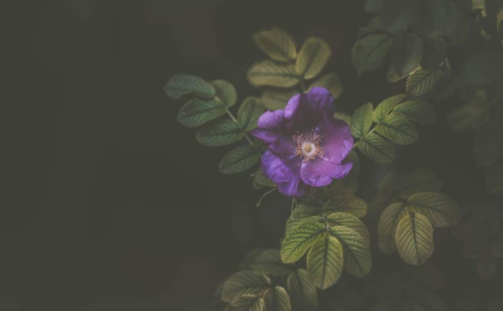 Flower on a vine