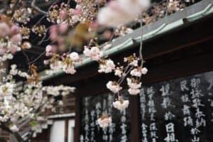 Flower Japan Summer