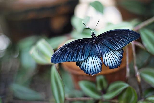 Tin butterfly
