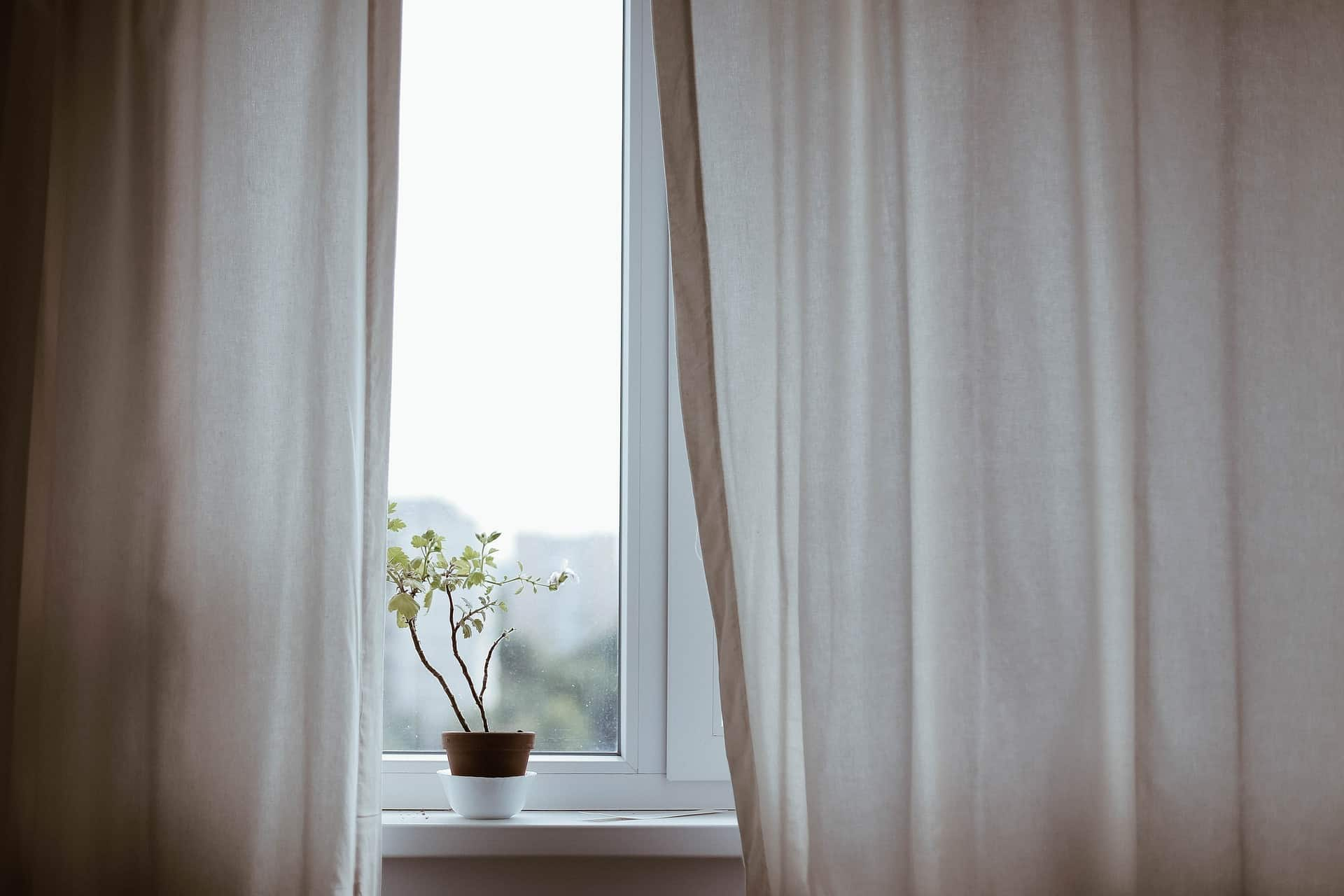 Window with white curtains and plant