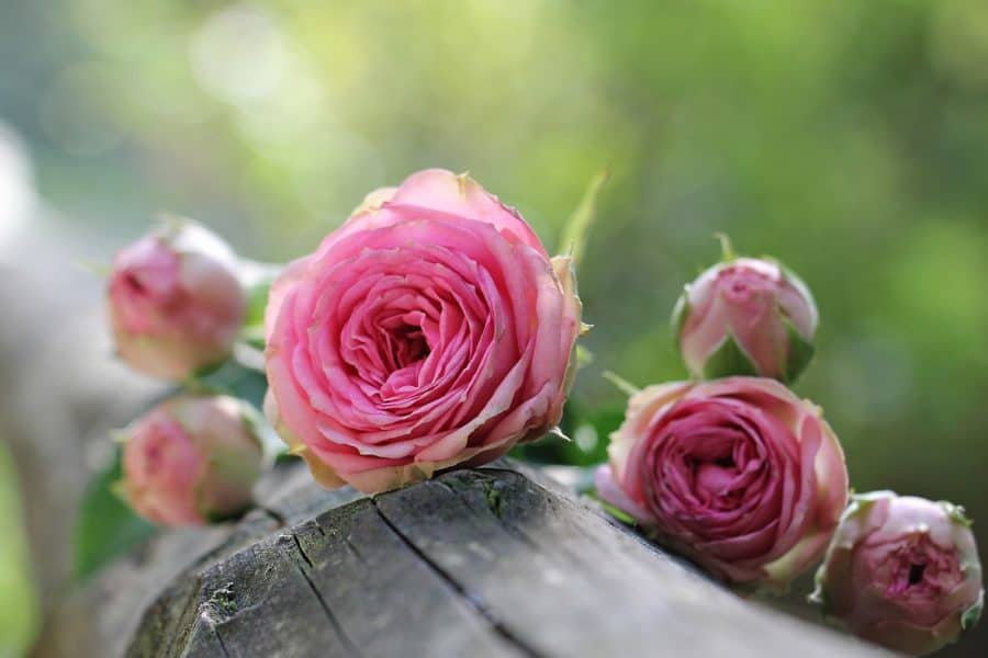 Against Ruins, in Praise of Pink
