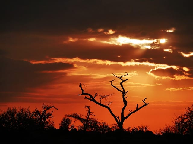 Tree in Kenya in the sunset