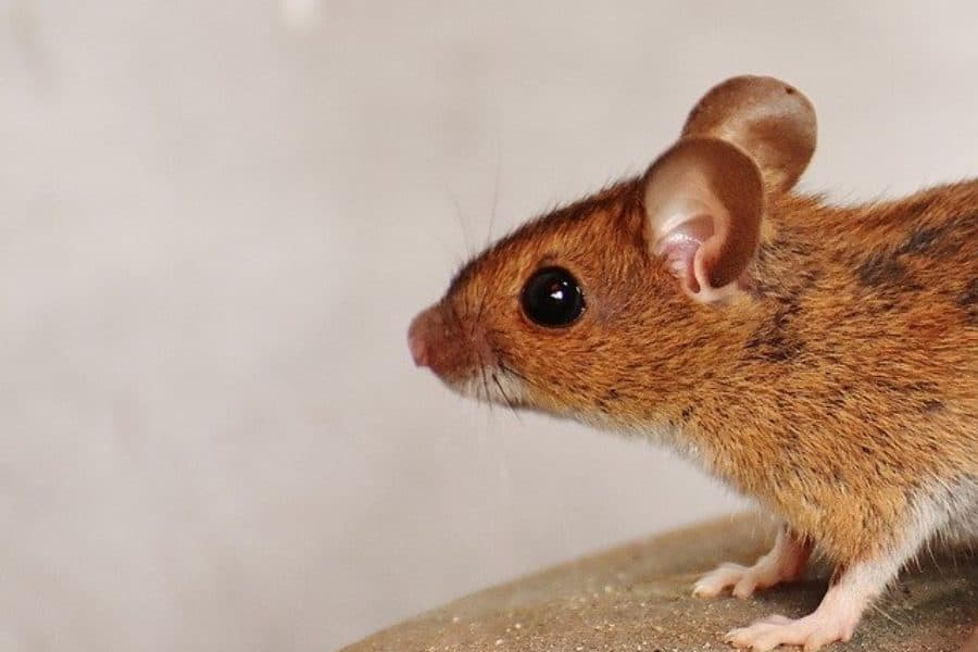 Mumina, the Mouse and I