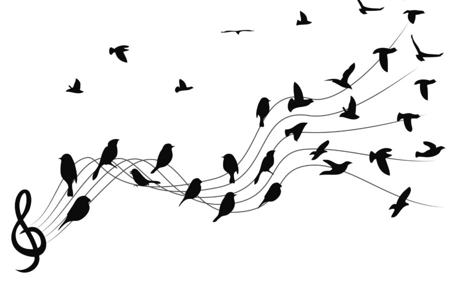 Bird Without a Song